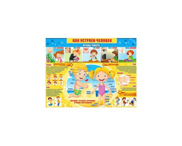 Плакат «Как устроен человек»