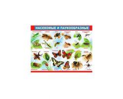 Плакат «Насекомые и паукообразные»