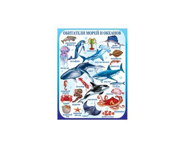 Плакат «Обитатели морей и океанов»