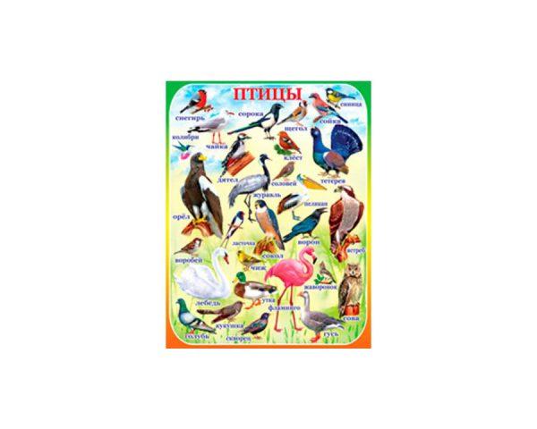 Плакат «Птицы»