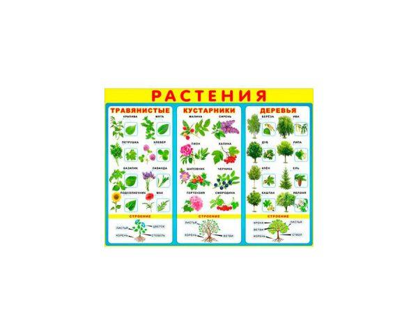 Плакат «Растения»