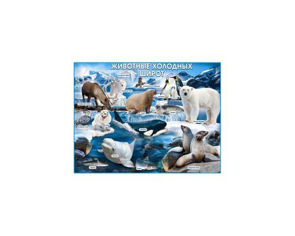 Плакат «Животные холодных широт»