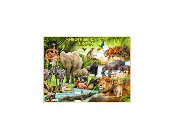 Плакат «Животные жарких широт»